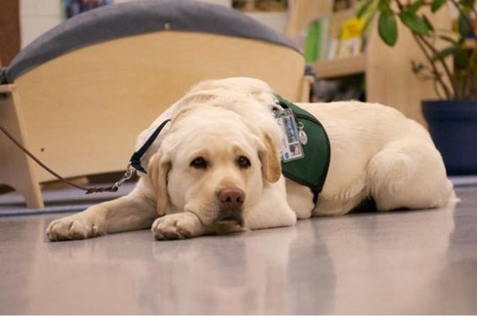 Cachorros ajudam na superação de momentos difíceis
